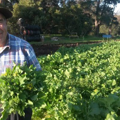 farmer vince joes market garden ceres organic farm