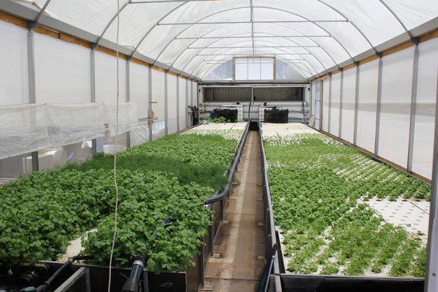 CERES Aquaponics Organic Urban Farming