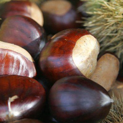 Jenny Indian Chestnuts