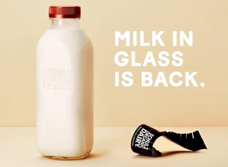 Milk_in_glass_is_back_SCHULZ