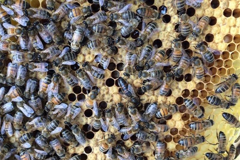 Bees_newsletter