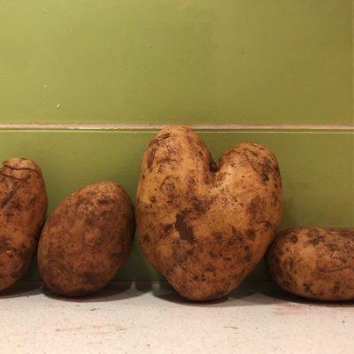 Hello Vegetable love spuds