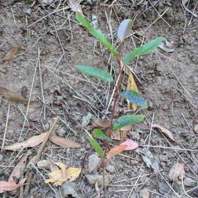 newsletter seedling in blackberry