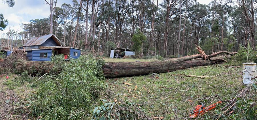 Storm damage salvage and CERES Fair Wood
