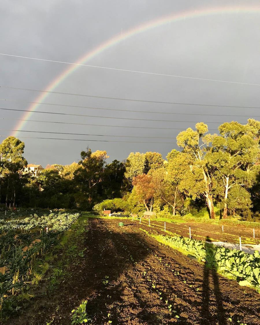 Rainbow over Joe's Garden, Coburg