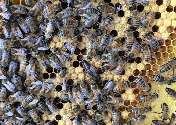 World Bee Day & The Fake Honey Saga