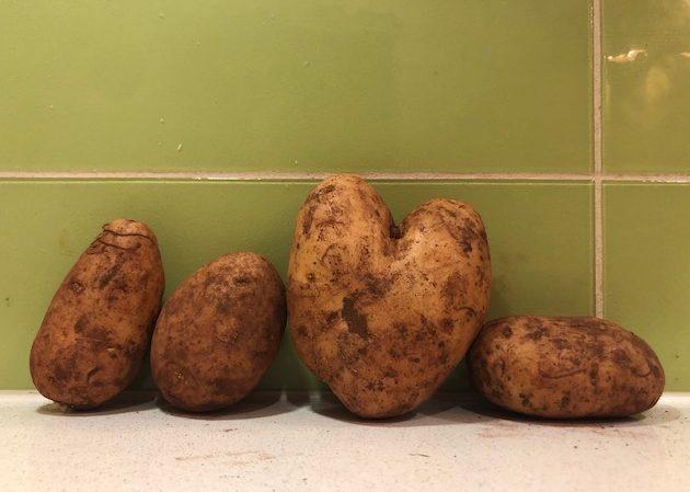 Joe's Farmgate turns Five / Hello Vegetable